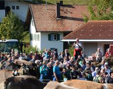 Viehscheid02